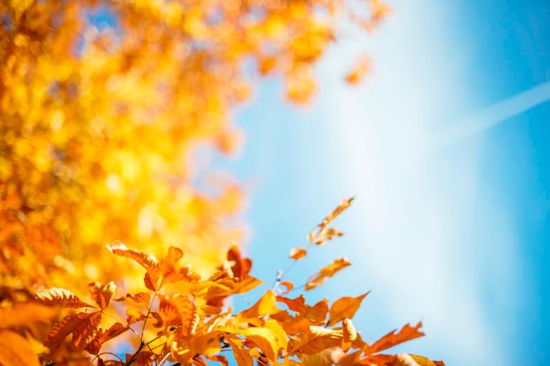 Paisaje de hojas en otoño con un contraste del cielo azul.