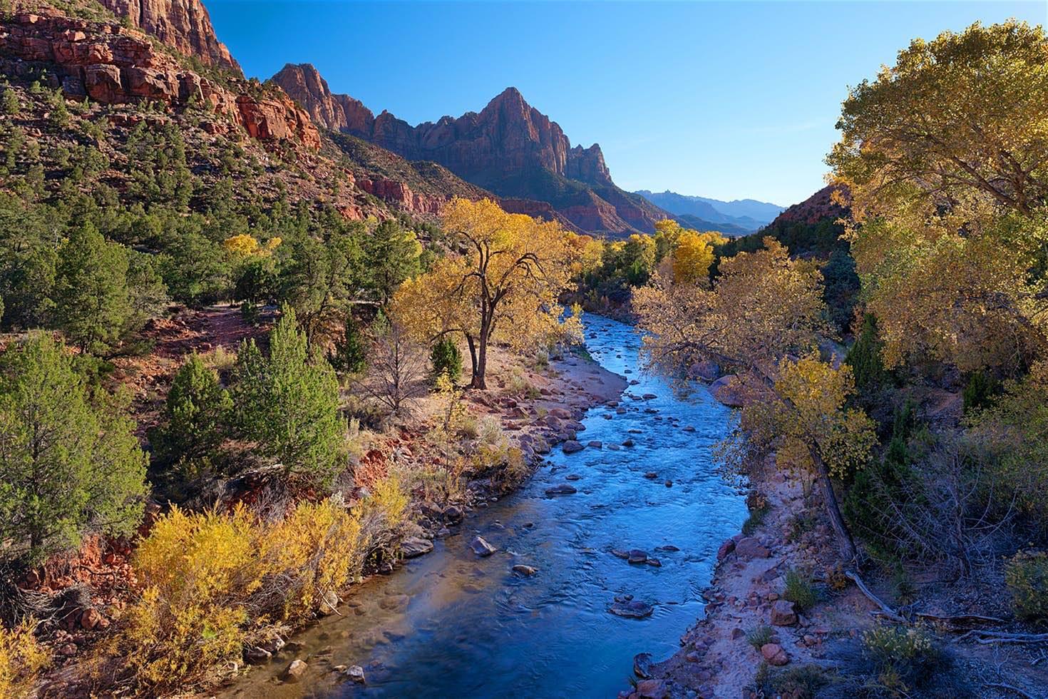 Manchas de brillantes arces, robles de color naranja y amarillos de álamos que trazan arroyos. TODO en contraste con el cielo azul del desierto y las pálidas rocas de Zion.