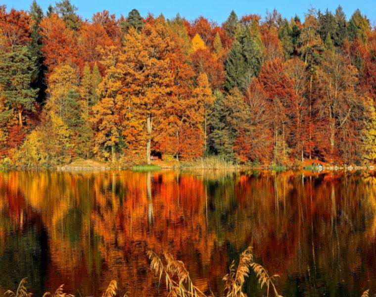 Paisaje de arboles en otoño donde se reflejan los colores naranja, café y verde en un lago.