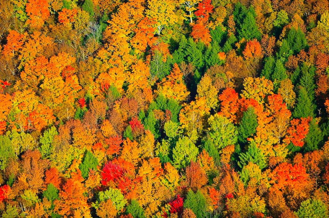 Los tonos anaranjados, cafés y verdes de arces, robles y alisos.Stowe es el lugar perfecto para los que les encanta caminar y andar en bicicleta en otoño