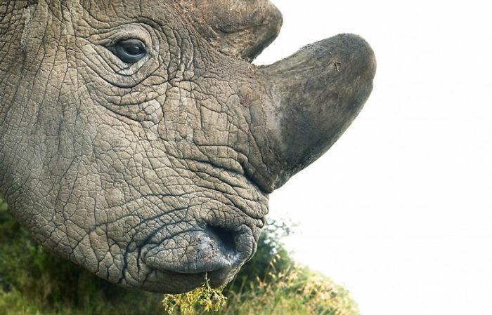 animales-en-peligro-de-extinciónanimales-en-peligro-de-extinción
