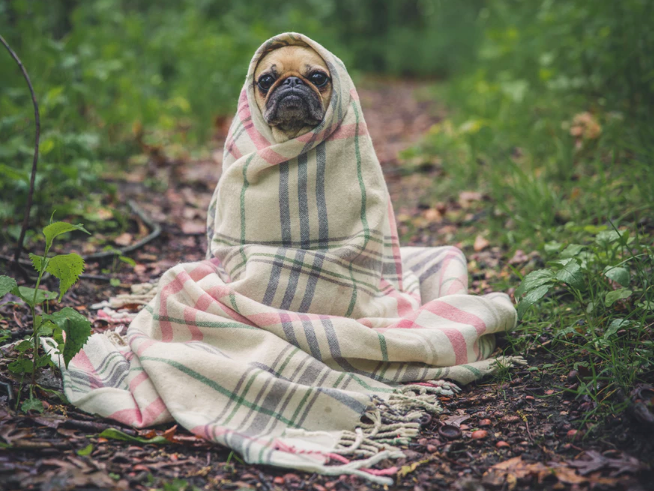 evita-gripa-y-resfriados